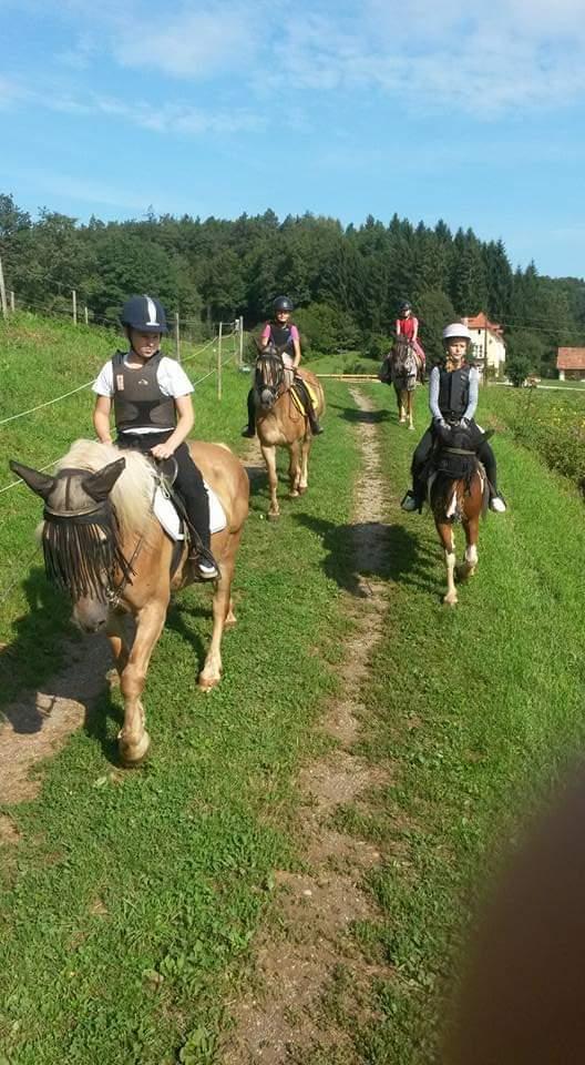 Kinder reiten mit Pferden auf einer Wiese