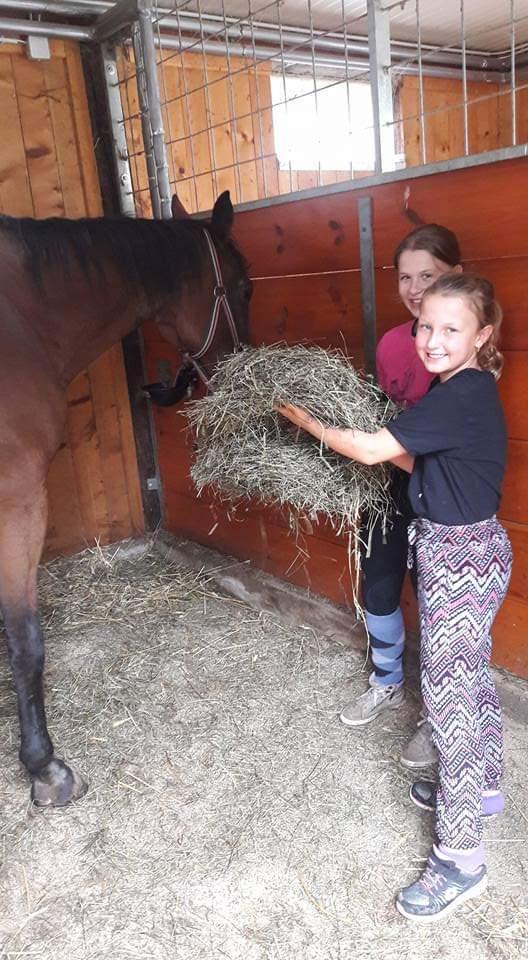 Kinder beim Füttern der Pferde