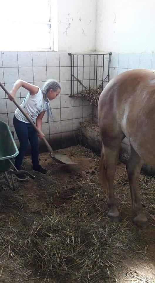 Kind beim ausputzen des Pferdestalls