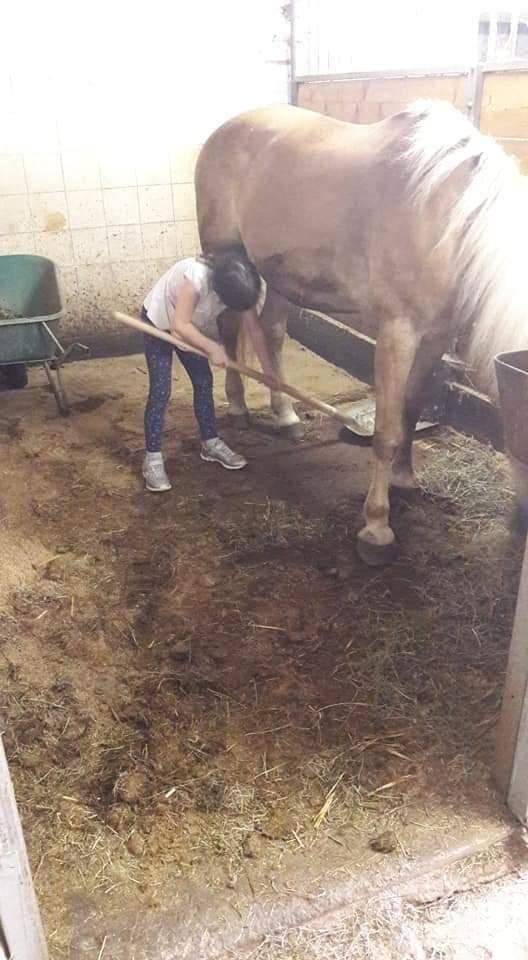 Kind beim Arbeiten im Pferdestall
