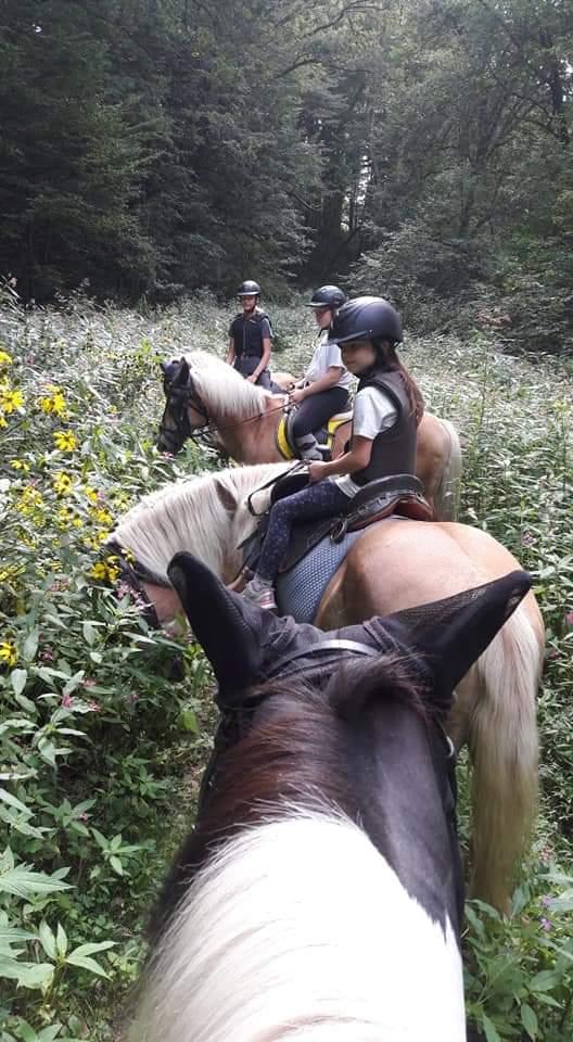 Kinder mit Pferde in einer hohen Wiese