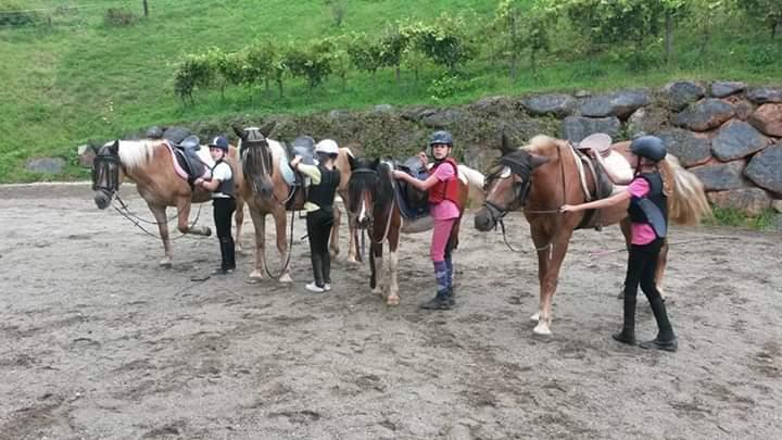 Pferde am Reitplatz beim Reitunterricht