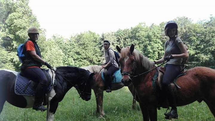 Pferde mit Reiter