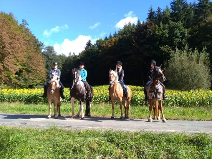 Pferde auf einem Weg, daninter wald
