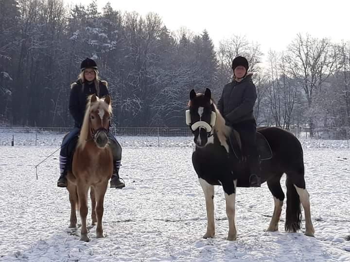 Zwei Pferde im Schnee mit Reiter
