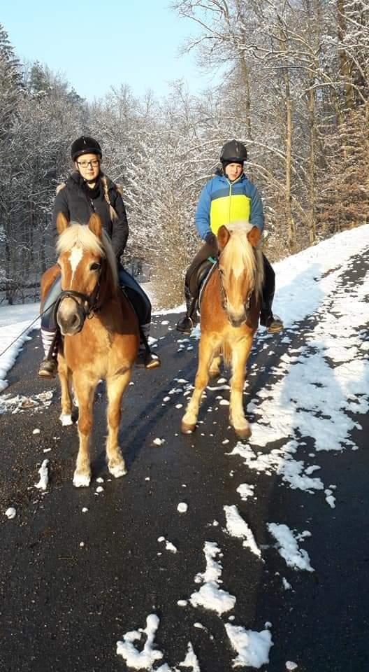 Tagesausritt im Schnee mit zwei Pferden